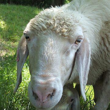 Garmisch Sheep by ProfThropp