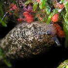 Ymmmyummmummmyumm Slime Mold! by Carla Wick/Jandelle Petters