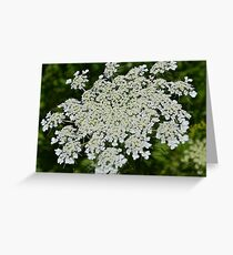 Queen Anne's Lace (Daucus carota) from John Boyd Thacher State Park  Greeting Card