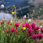 Wild Flowers by Valentina Gatewood