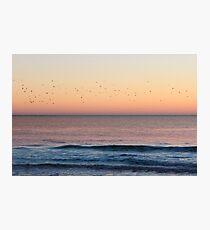 Flock of Seagulls Photographic Print