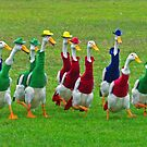 Indian Runner ducks race at dog trials by Andy Berry