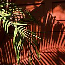 Palms and shadows by Kerry Dunstone