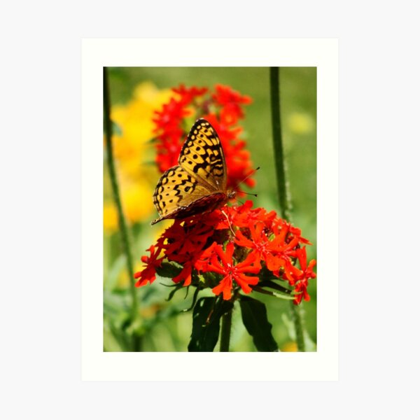 Gold Winged Butterfly on an Orange Flower Art Print