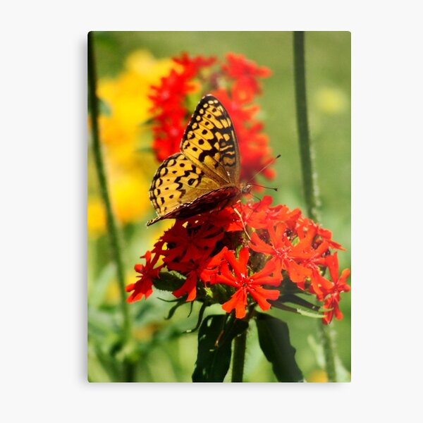 Gold Winged Butterfly on an Orange Flower Metal Print