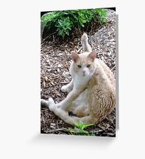 Buddy the Cat Greeting Card