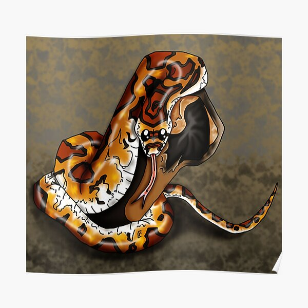 Corn Snake Posters Redbubble