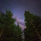 Starlit Woodland by Brandt Campbell