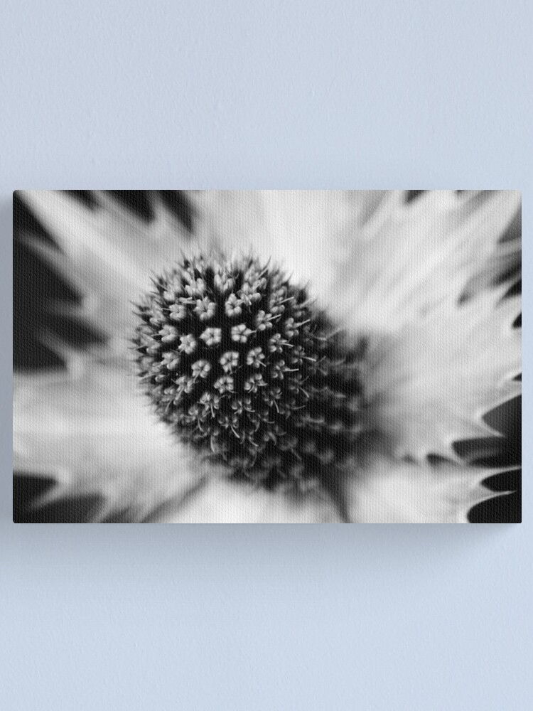 Alternate view of Heart of the White Explosion in Monochrome Canvas Print