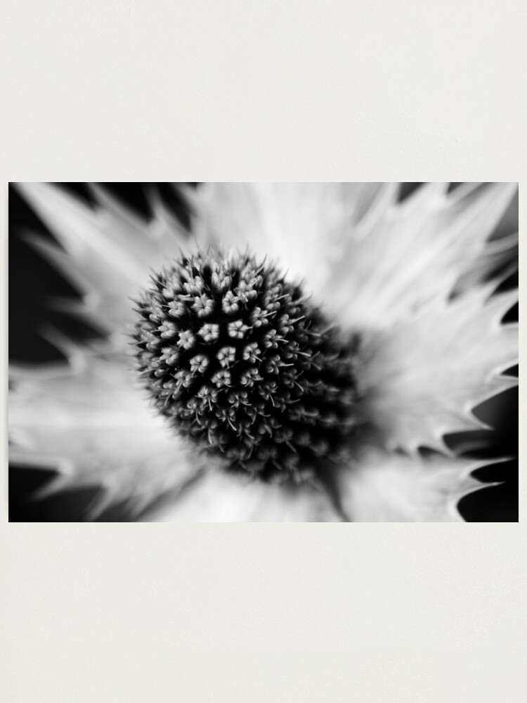 Alternate view of Heart of the White Explosion in Monochrome Photographic Print