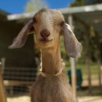 Say Goat Cheese by BigRedCurlyGuy