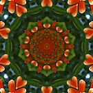 Orange Trumpet Vine Mandala by medley