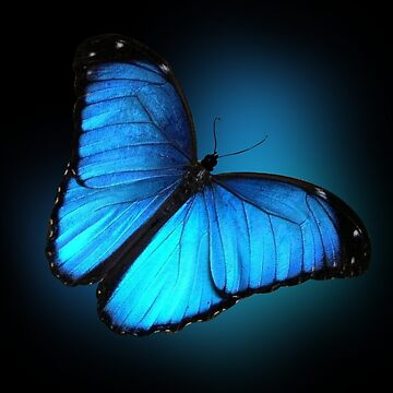 Blue Butterfly  by Irisangel