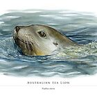 Australian Sea Lion illustration by RedCloudDesign