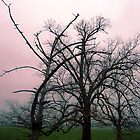 Trees in mist at dawn, Gippsland  by Roz McQuillan