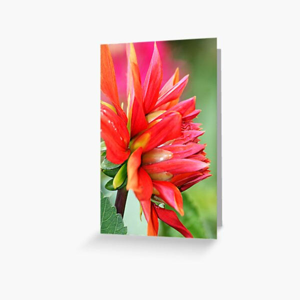Colourburst Greeting Card