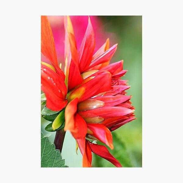 Colourburst Photographic Print