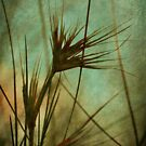 Seagrass Dreams by Trish Woodford