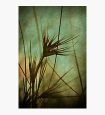Seagrass Dreams Photographic Print