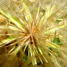 Dandelion Intimacy by Kathie Nichols