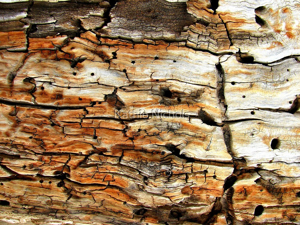 Fractured Bark Art by Kathie Nichols