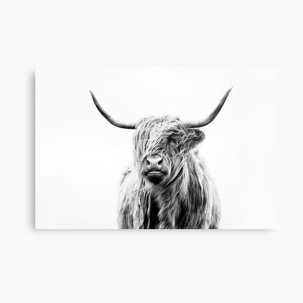 B+W Highland cow Metal Print