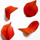 Four petals by Steve plowman