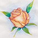 Orange and pink watercolour rose by chrissyturley
