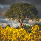 English spring in the rapeseed field by Chris Fletcher