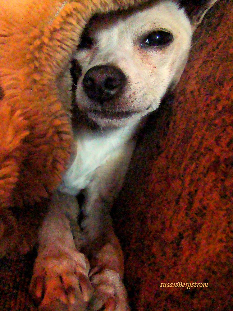 Lil' Bit And His Blankie #3...Just Trying To Be A Happy Guy by Susan McKenzie Bergstrom