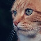 How Gorgeous Can A Ginger Cat Get! by Anne Macdonald