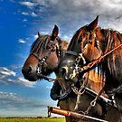 Belgian Horses by Adri  Padmos