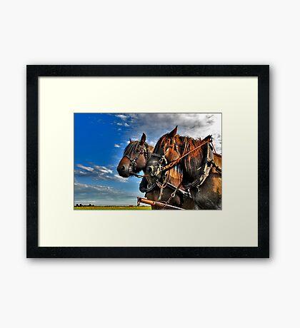 Belgian Horses Framed Print