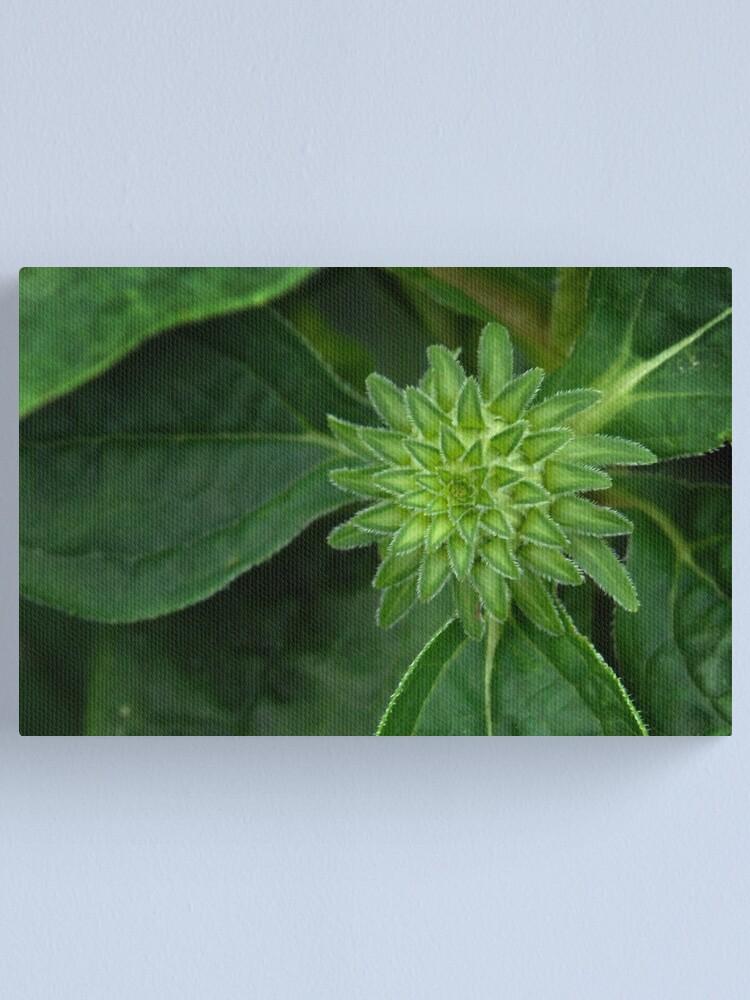 Alternate view of Cone Flower Beginnings Canvas Print