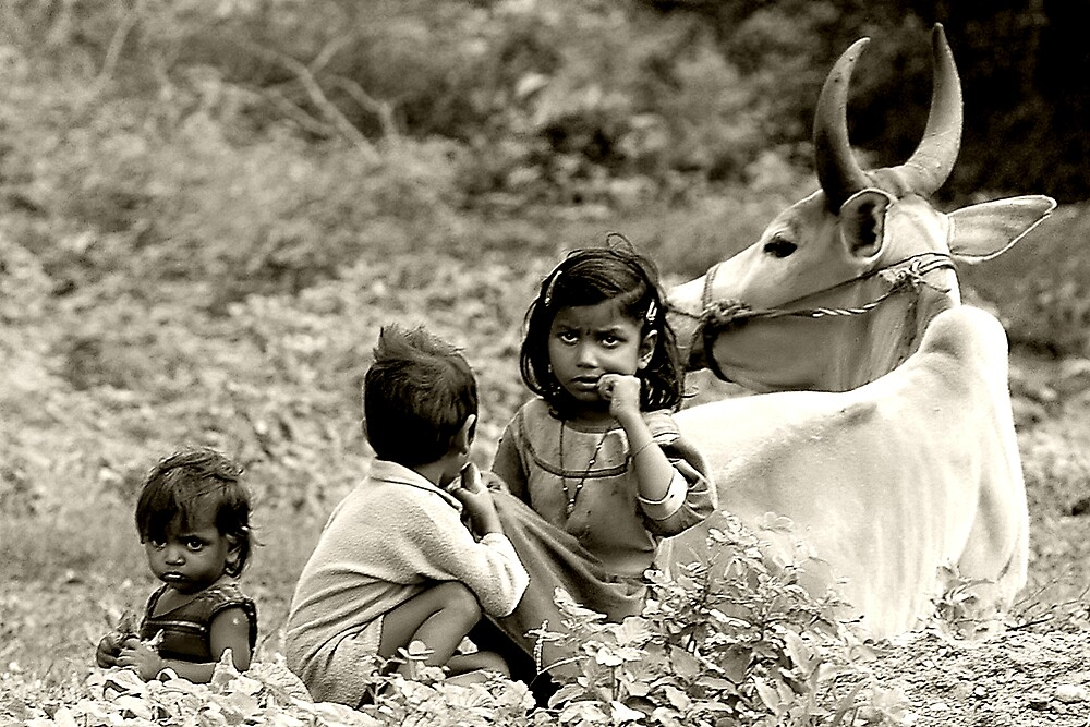 The Real Country Life by Mukesh Srivastava