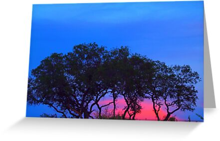 Row of Silhouette Tree's at Sunset by kellimays