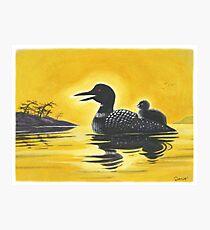 Loon on Lake Simcoe Photographic Print