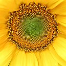 Sunflower by Ludwig Wagner