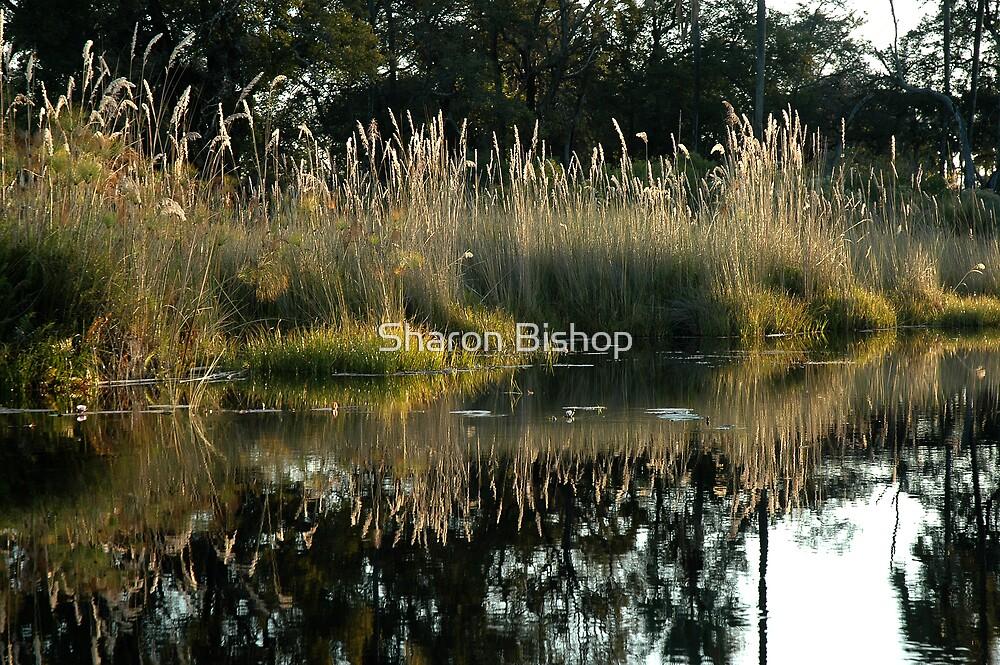 Okavango Delta, Botswana by Sharon Bishop