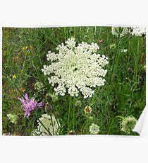 Columbia/Kooteney Wildflowers Poster