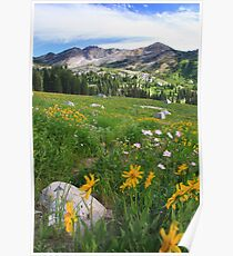 Albion Basin Poster