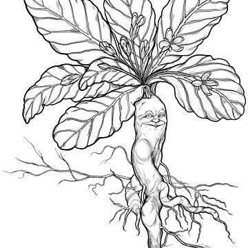 Mandrake! by Rougaroux