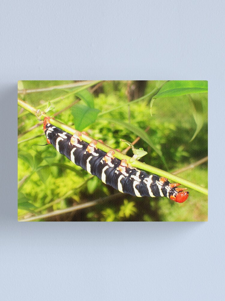 Alternate view of Giant Caterpiller Canvas Print