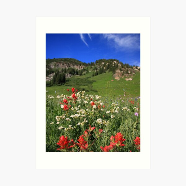 Albion Basin Wildflowers Art Print