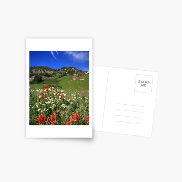 Albion Basin Wildflowers Postcard