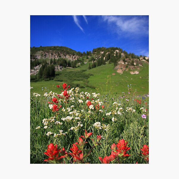Albion Basin Wildflowers Photographic Print