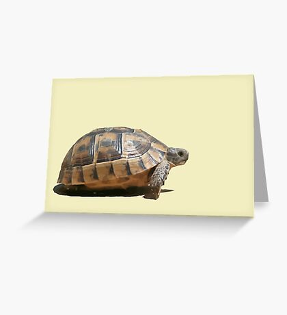 Sideview of A Walking Turkish Tortoise Isolated Greeting Card