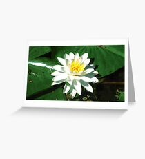 Lily on the Water Greeting Card