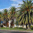 Beautiful Palms by Linda Miller Gesualdo