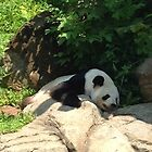 Lazy days at the national zoo by TheVioletWitch